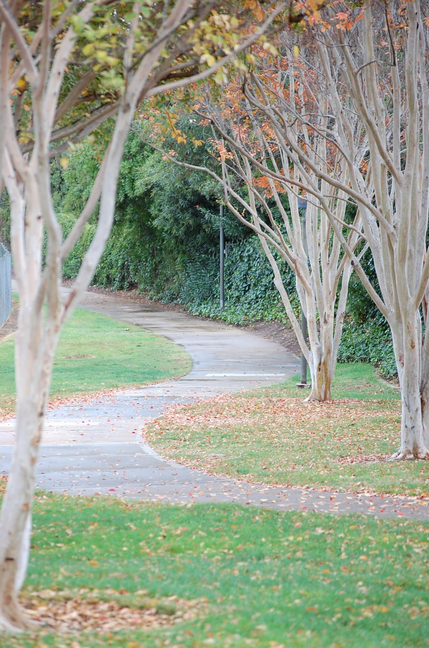 park trees, walking path, fall leaves